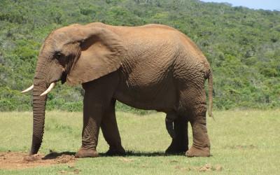 Day 4: Addo Elephant National Park