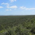 Addo Park landscape 1