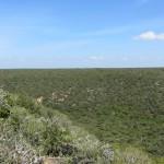 Addo Park landscape 3