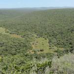 Addo Park landscape 4